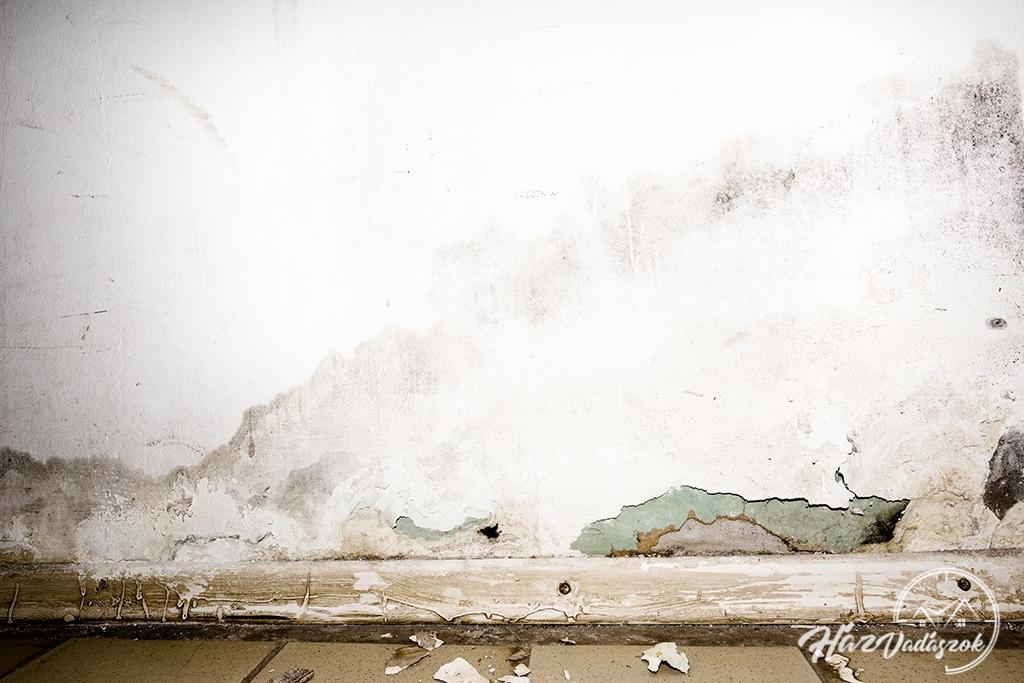 penészedő fal